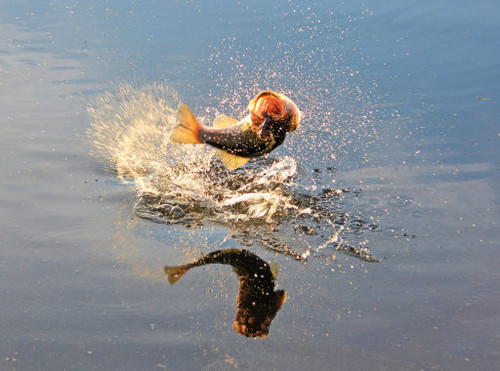 Bass Splash