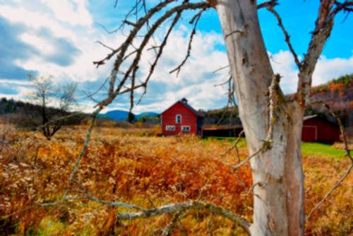 Birch Barn
