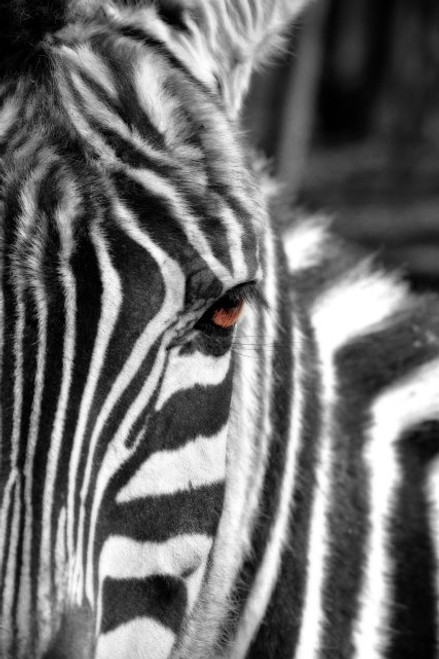 Striped To The Soul