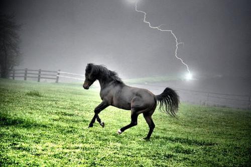 Electric Stallion