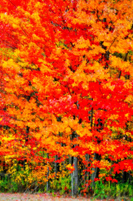 Glory Of Fall
