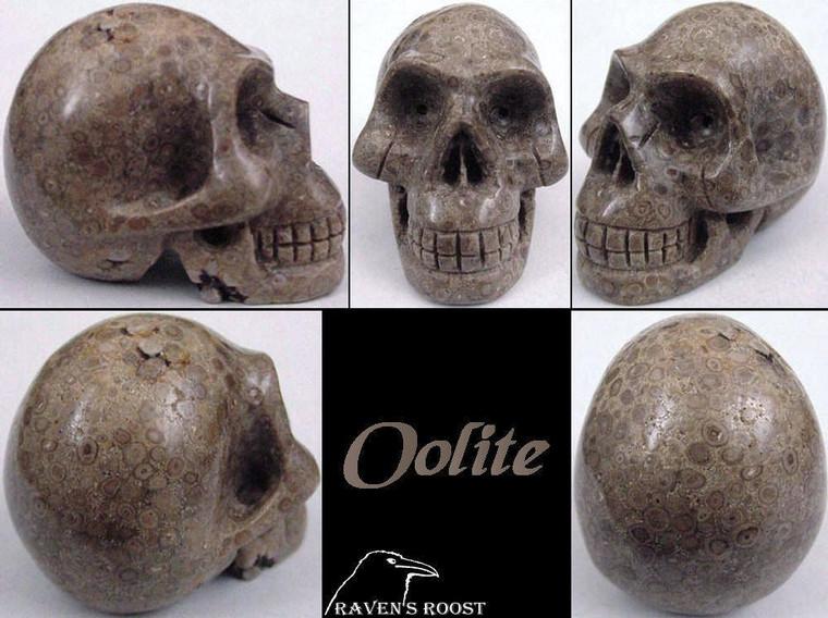 Raven's Carved Fossil Oolite Crystal Skull