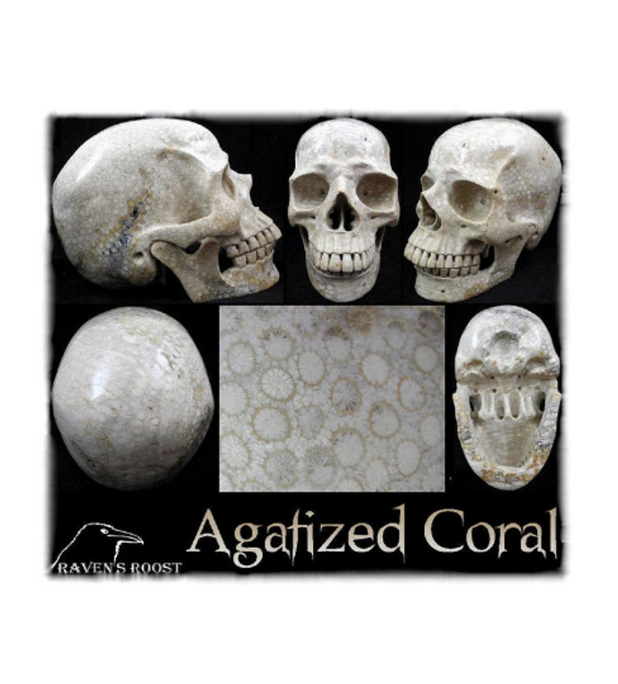 AGATIZED CORAL Carved Crystal Skull ~ SUPERB Larger-Than-Lifesize Indonesian Fossil Coral Skull ~ Raven's Roost