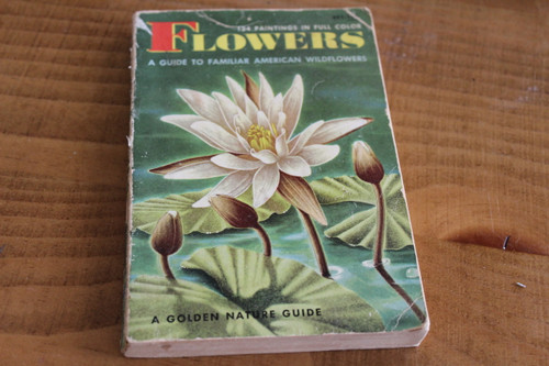 Flowers: A Guide to Familiar American Wildflowers by Herbert S. Zim Ph.D. and Alexander C. Martin, Ph.D. Illustrated by Rudolf Freund