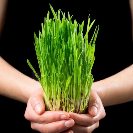 5 Amazing Benefits of Oat Grass