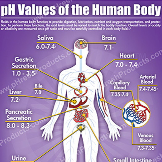 pH Values of the Human Body
