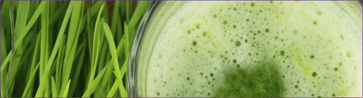 15-744px-wheat-grass-juice.jpg