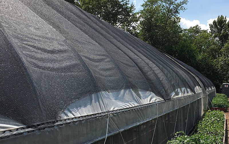 Best Shade Cloth for Tomato Production - Reduce Detrimental Scalding and Shouldering - Your Yield is Your Profit