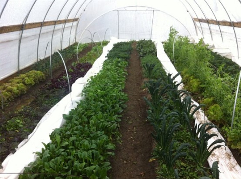 9 of the Best Winter Crops to Grow in a High Tunnel | Profitable Farming