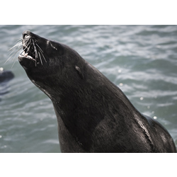 Not this kind of seal