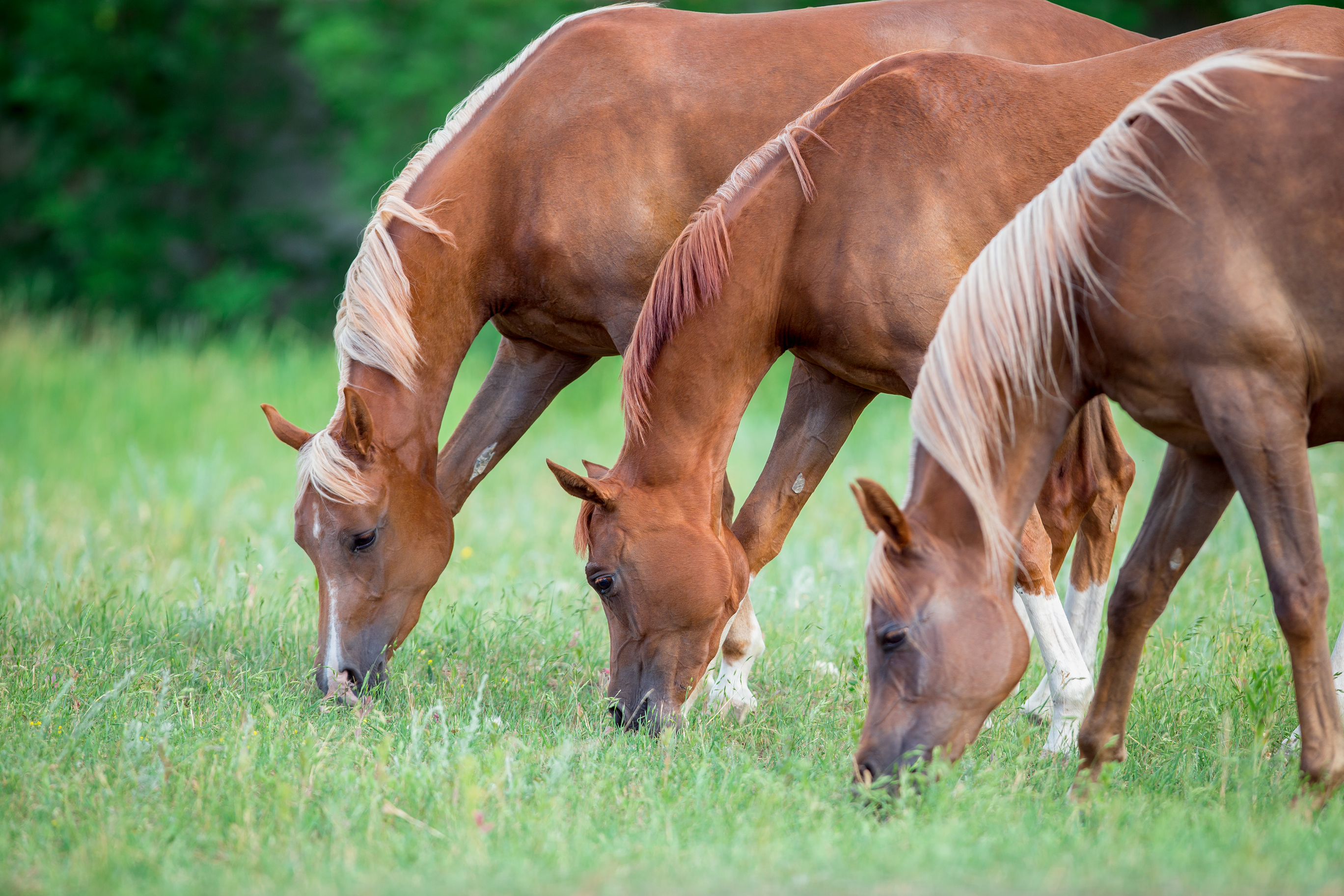 De-worming Your Horse: Using Chemicals and Herbs for Management and