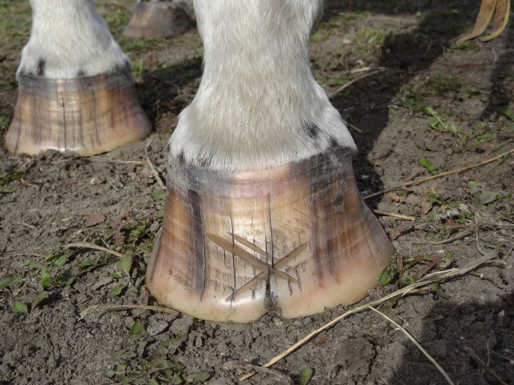 High heels The Laminitis Site