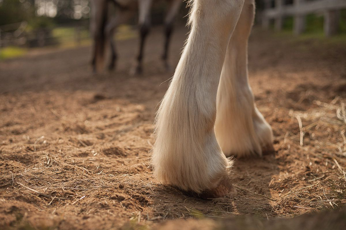 Hooves are an extremely important part of horse health care.