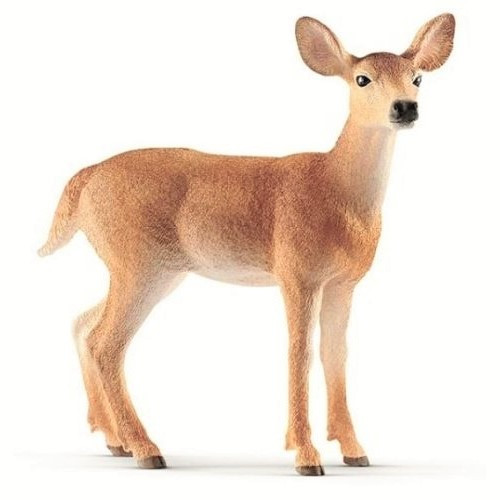 Doe, White-Tailed