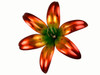 "Copper Lily Flower  - Double Bloom - 84"" Tall - Oversized Item - CONTACT US FOR SHIPPING & ORDER INFO."