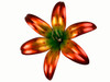 """Copper Lily Flower - Triple Bloom - 84"""" Tall - Oversized Item - CONTACT US FOR SHIPPING & ORDER INFO."""