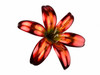 """Copper Lily Flower - Single Bloom - 42"""" Tall - Oversized Item - CONTACT US FOR SHIPPING & ORDER INFO."""