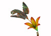 "Copper Hummingbird with Lily Flower on Spring - 6"" wingspan"