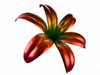 """Copper Lily Flower - Double Bloom -  60"""" Tall - Oversized Item - CONTACT US FOR SHIPPING & ORDER INFO."""