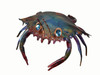 "Copper Blue Crab - 6"" Overall Width"