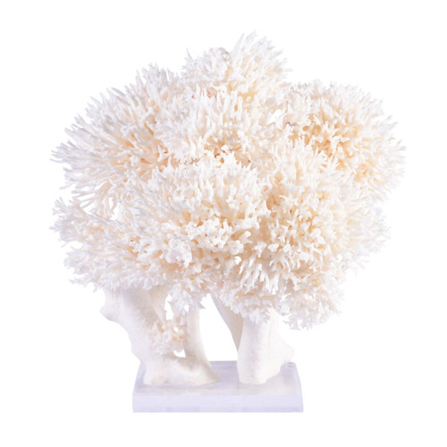 Birdsnest Coral Creation On Acrylic Base