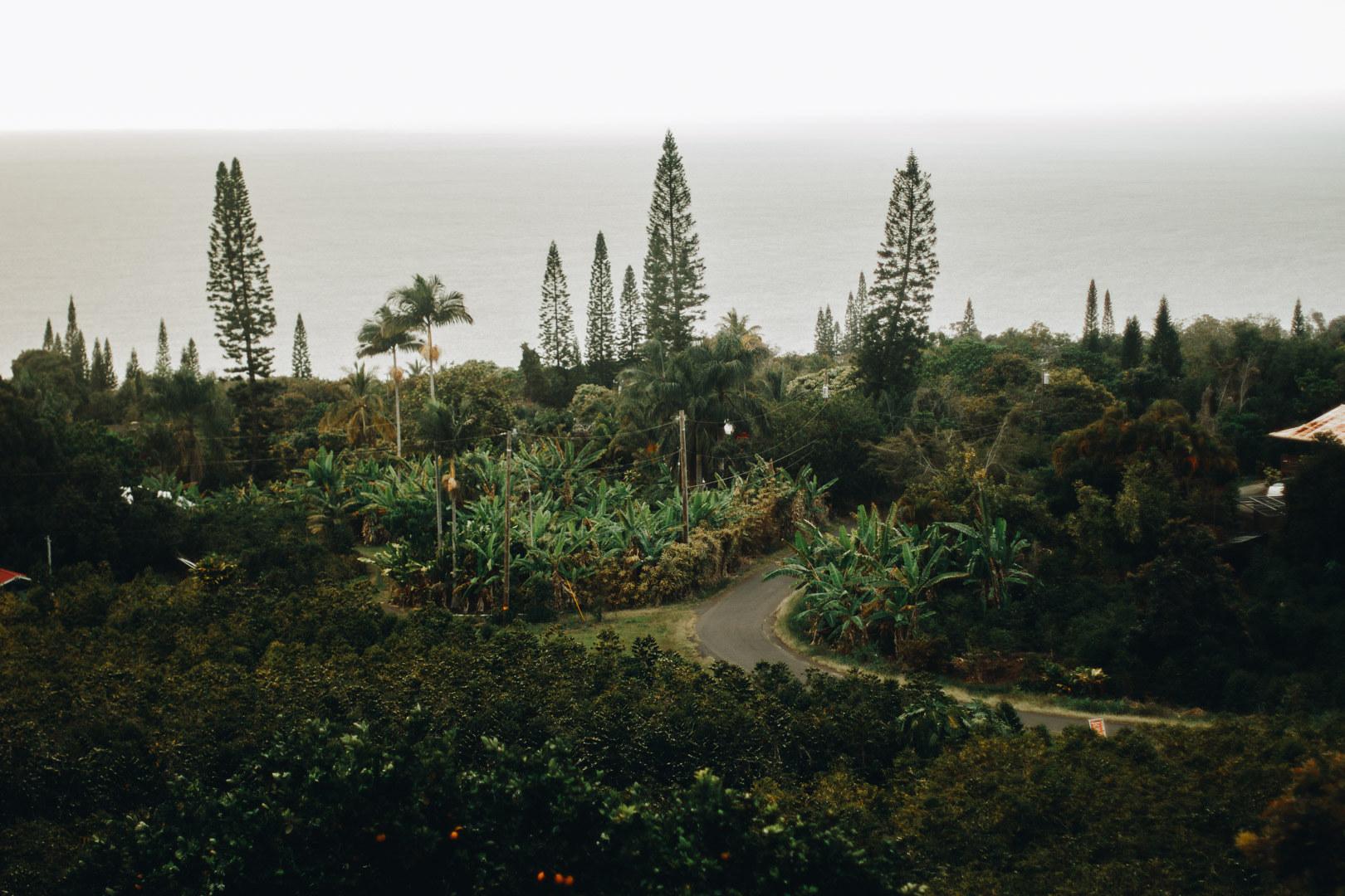 Heavenly Hawaiian Kona Coffee Farms