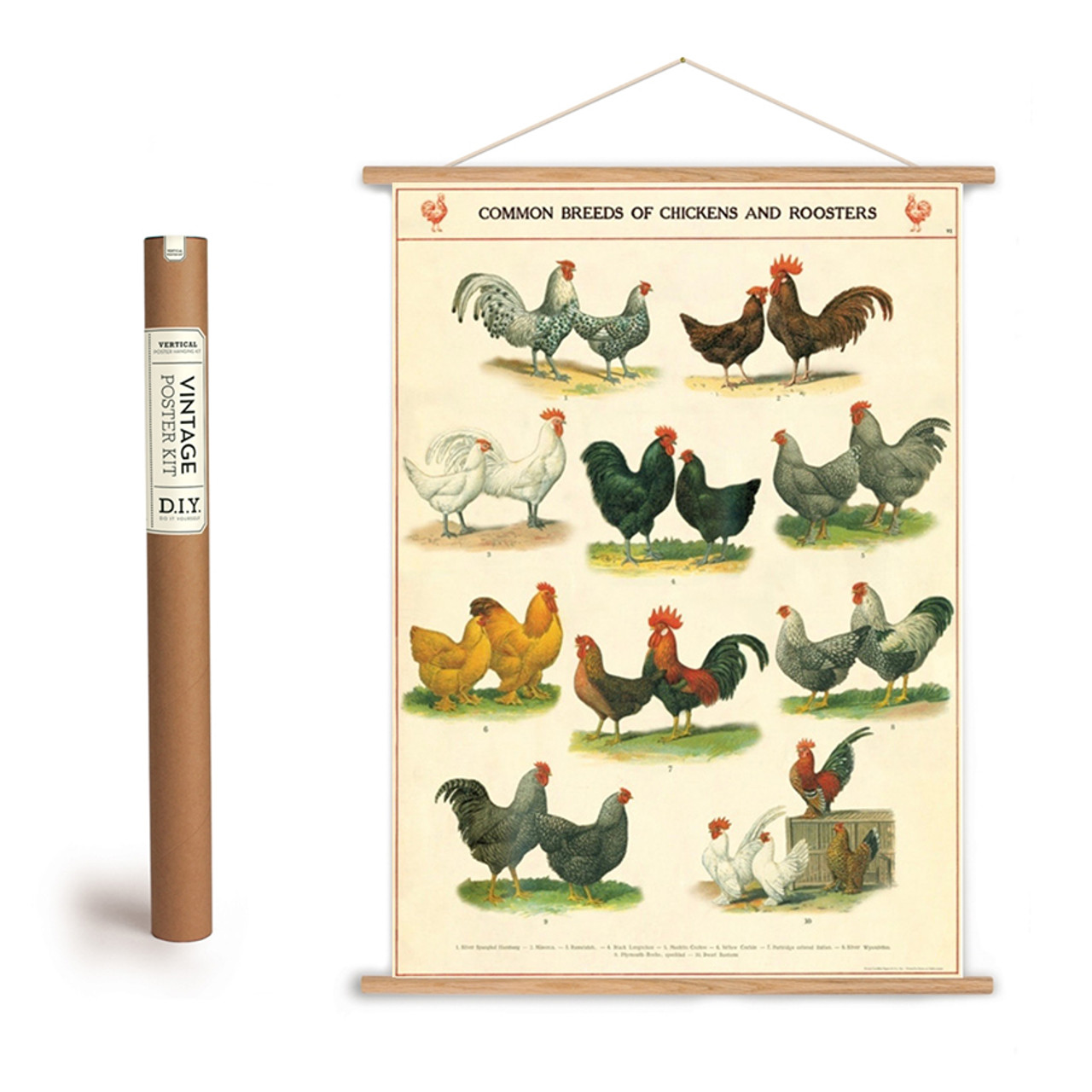 Common Breeds of Chickens and Roosters Poster + Hanging Kit