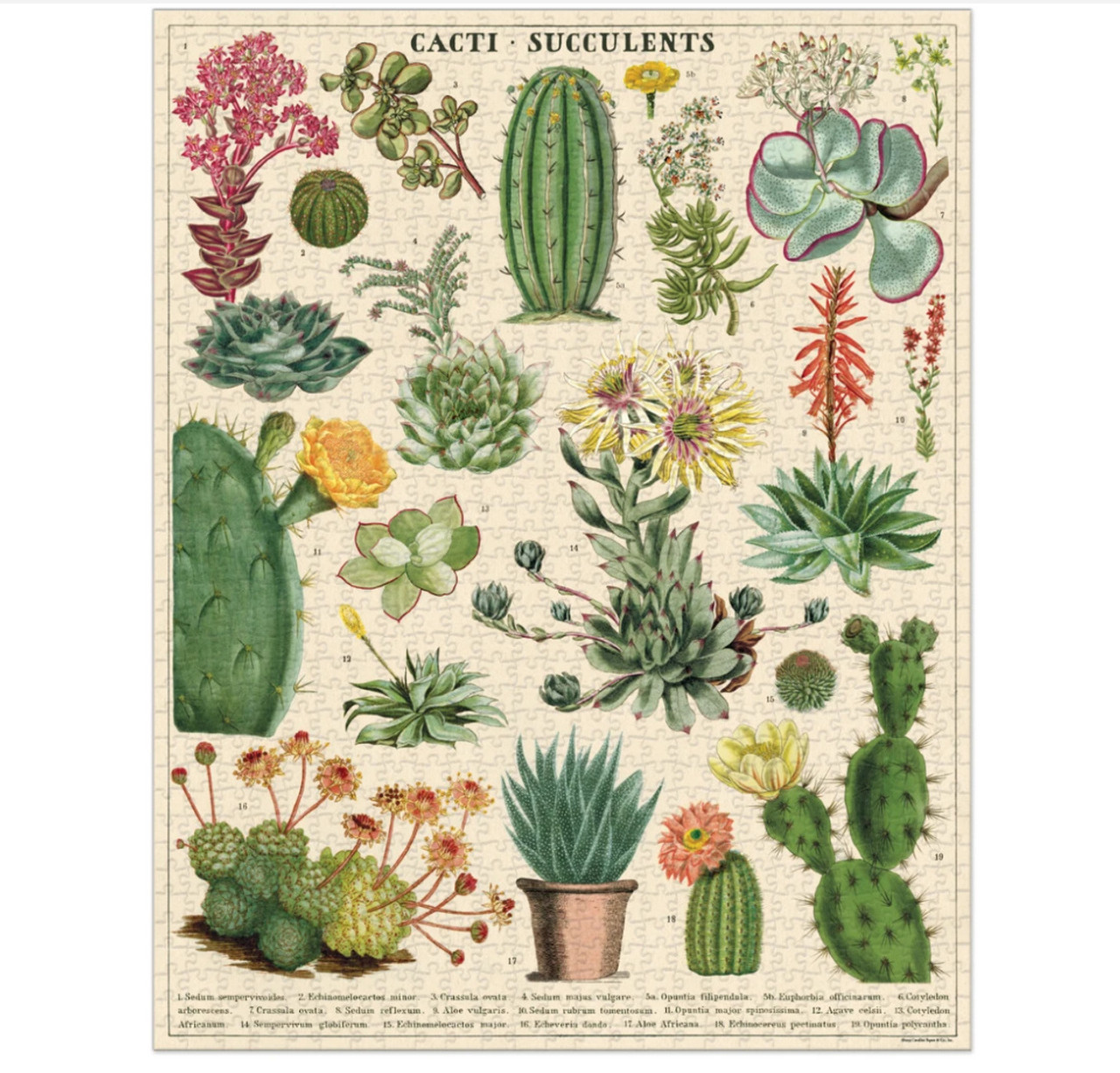 1000 Piece Cacti and Succulents Jigsaw Puzzle - A