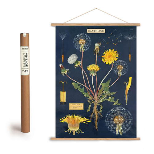 Dandelion Botanical Illustration Poster + Hanging Kit