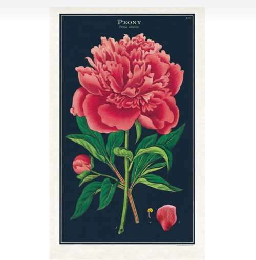 Dramatic Peony Kitchen Towel Vintage Botanical Illustration - A