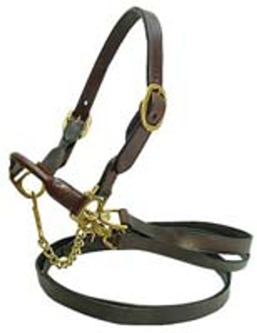 Cattle Halter Brown Brass