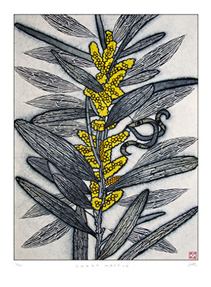 coast wattle (pale) large archival print