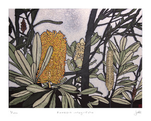 banksia integrifolia  large archival print