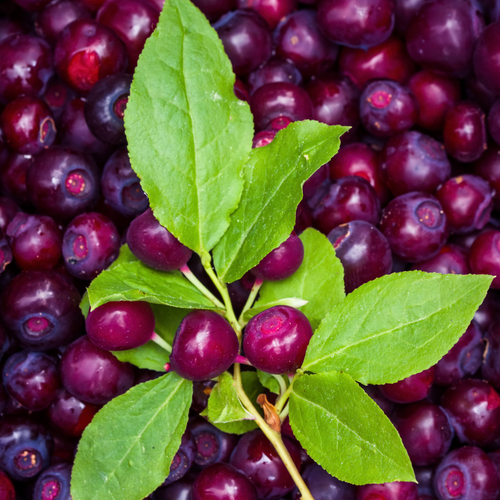 Huckleberry White Balsamic