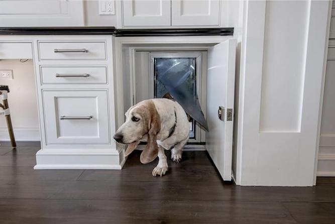 How to Build a Hidden Cabinet Doggy Door