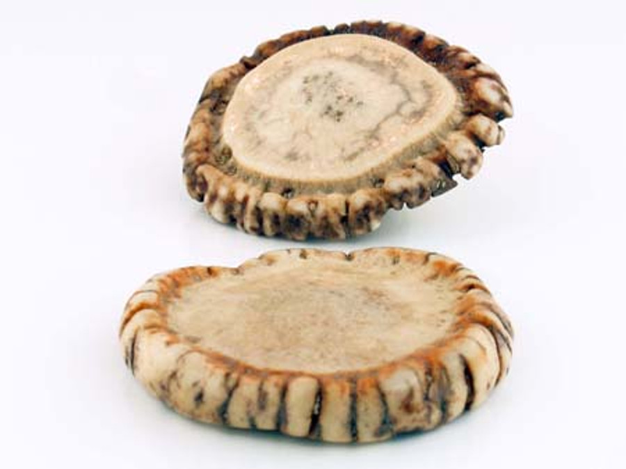 1 Count 2-1/4 Inch Elk Antler Natural Rosette (Sale)