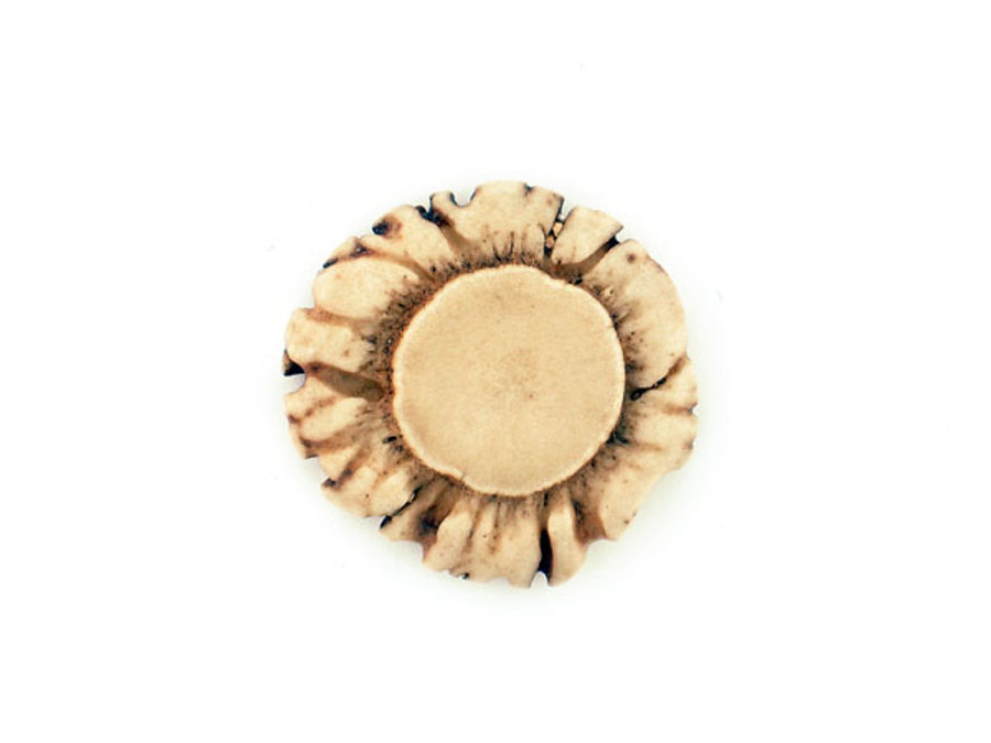 1 Count 30-40mm Deer Antler Polished Undrilled Rosette - 1 (Sale)