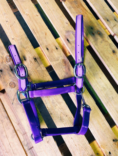 PVC Halter - Purple and Lilac with Chrome Buckles