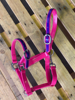 PVC Halter - Pink and Purple with Chrome Buckles