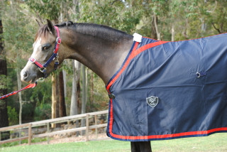 Navy Show Rug with Red Trim