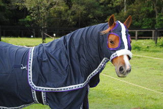 Navy Set Set with horse and crown trims