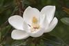 Monastery Incense - Magnolia
