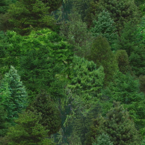 Packed Evergreen Trees Fabric - 176Green