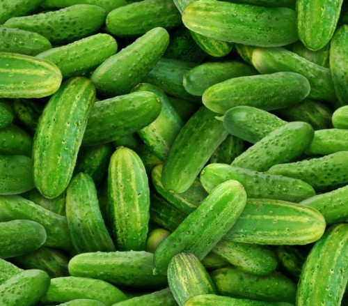 Tossed Cucumbers - 437Green