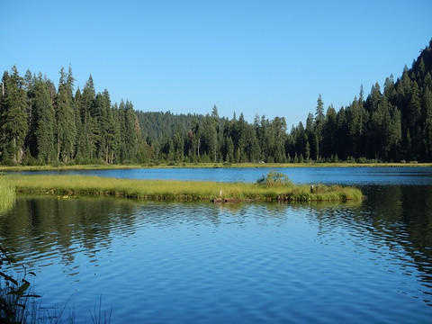 Carnivorous Plants In California- Northwestern Plumas County