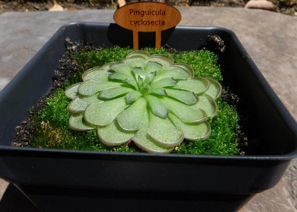 Carnivorous Plants for Sale