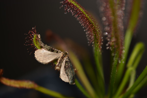 Plants Eating Bugs