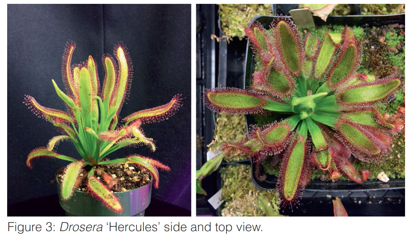 carnivorous plants for sale
