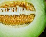 Honeydew Green Flesh Seeds Qty. 30