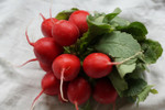 Cherry Belle Radish Seeds QTY. 200